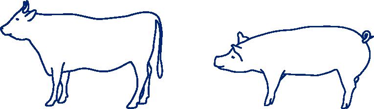 牛・豚の画像